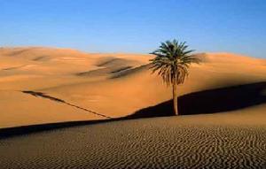 Sahara05